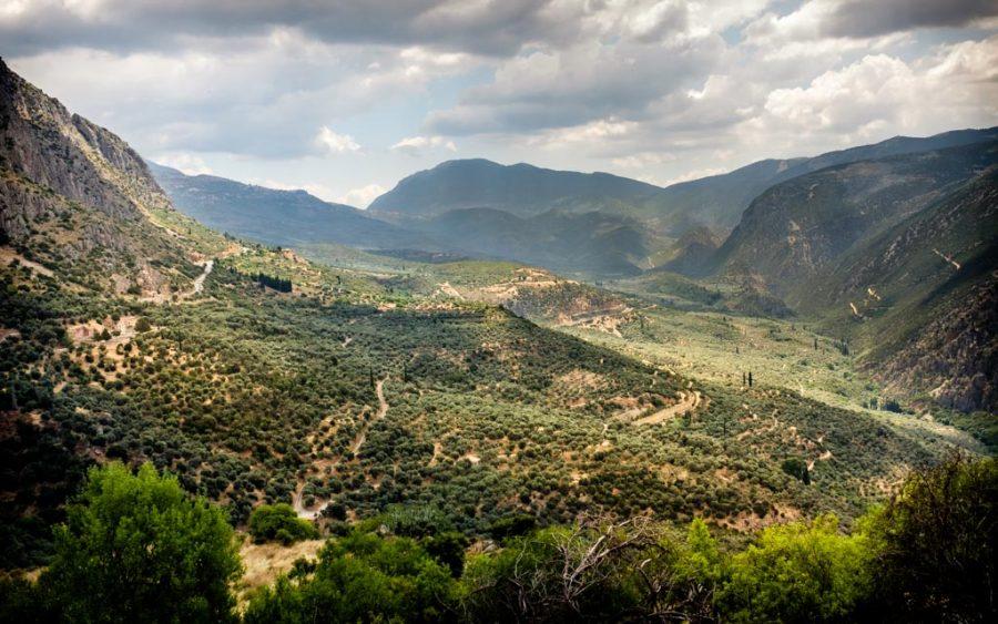 photo couleur paysage champ d'olivier en Grèce
