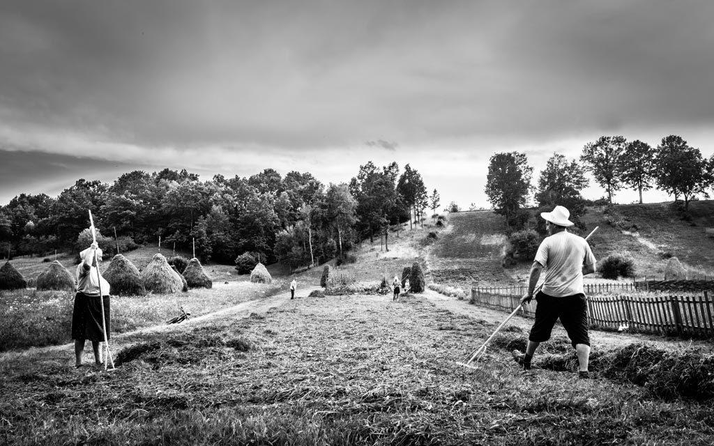 photo noir et blanc famille qui ramasse du foin dans le Maramures Roumanie